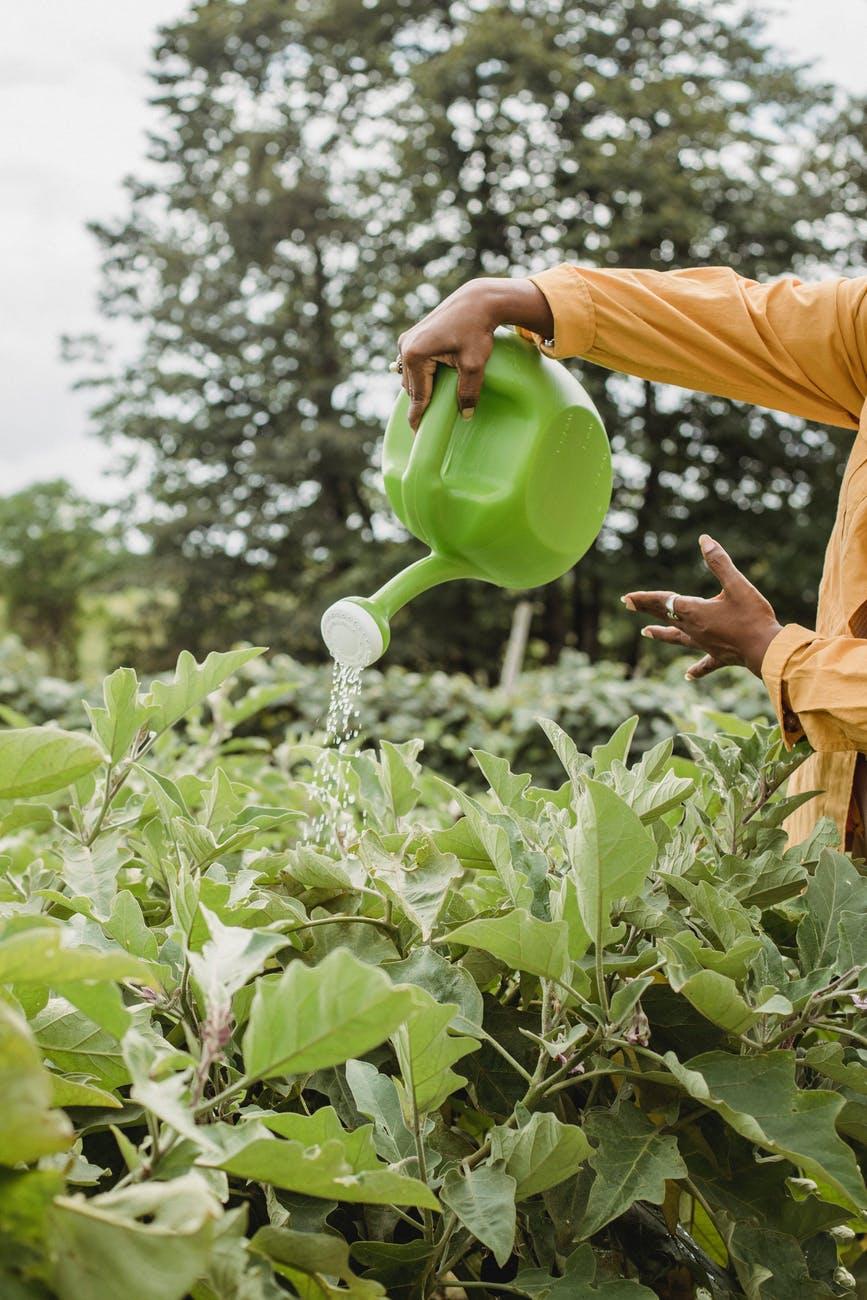 unrecognizable woman watering plants from pot in garden